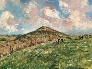 Belted Galloways on the Malvern hills